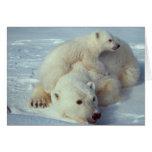 White Polar Bear family Greeting Card
