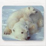 White Polar Bear family Mouse Pad
