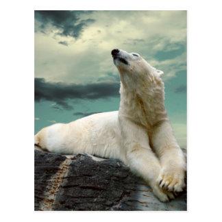 White Polar Bear Hunter on rock Postcard