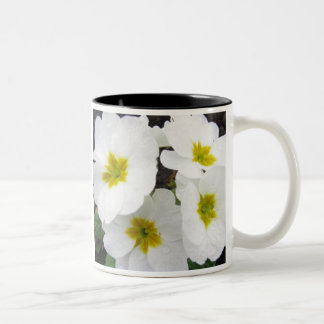 White Polyanthus Two-Tone Coffee Mug