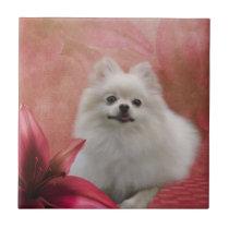 White Pomeranian Dog Flowers Animal Ceramic Tile
