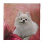 White Pomeranian Dog Flowers Animal Small Square Tile