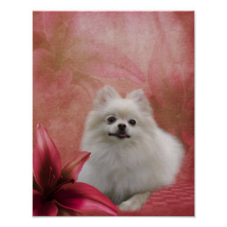 White Pomeranian Dog Lily Flowers Poster