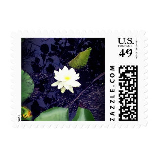 White Pond Lily Stamp