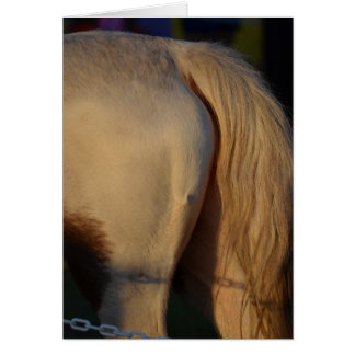 white pony flank and tail from side horse equine card