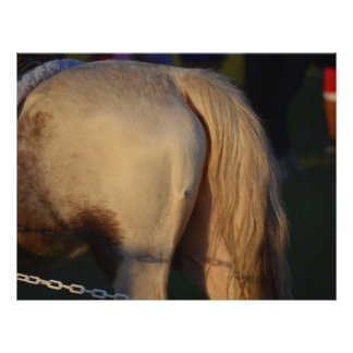 white pony flank and tail from side horse equine flyers