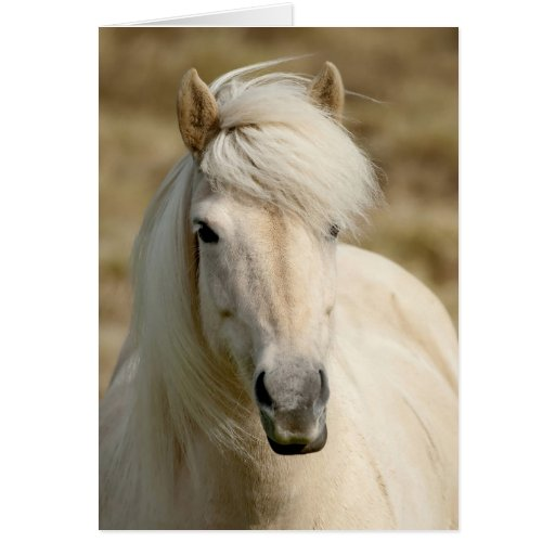 White Pony Greeting Cards