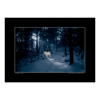 White Pony in a Blue Wood Poster