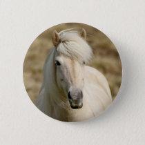 White Pony Pinback Button