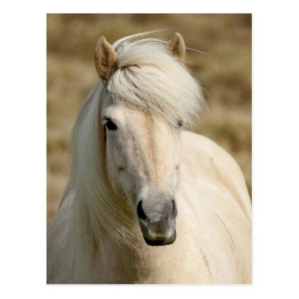 White Pony Post Cards