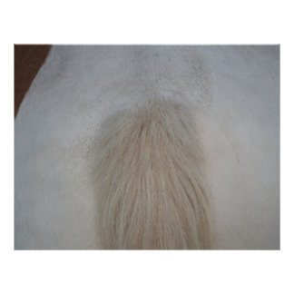 white pony tail straight on equine horse design personalized flyer