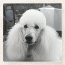 White poodle glass coaster