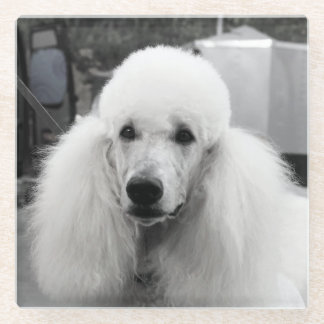 White poodle glass coaster