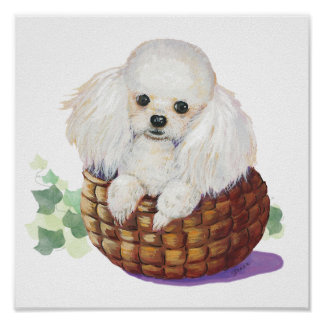 White Poodle Puppy in a Basket Art Print