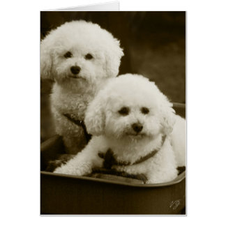 White Poodle Puppy Twins Card
