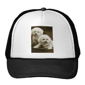 White Poodle Puppy Twins Trucker Hat