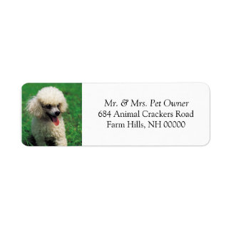 White Poodle Return Address Mail Labels Stickers