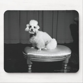 White poodle sitting on stool B&W Mouse Pad