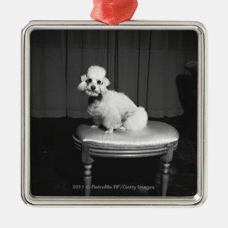 White poodle sitting on stool B&W Square Metal Christmas Ornament