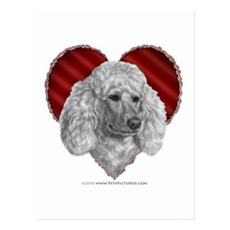 White Poodle with Heart Postcard