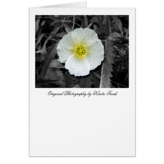 White Poppy After the Rain Card