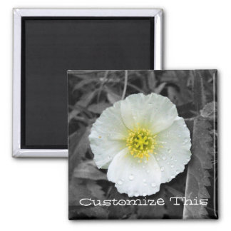 White Poppy After the Rain; Customizable Magnet