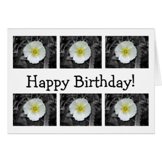 White Poppy After the Rain; Happy Birthday Card