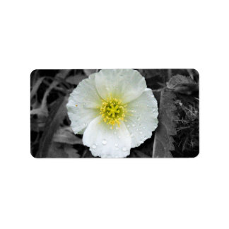 White Poppy After the Rain Label