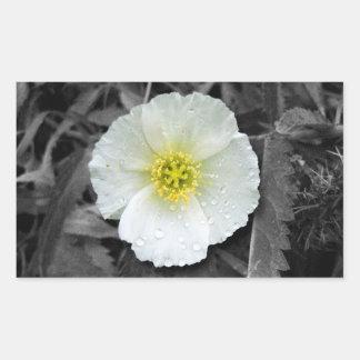 White Poppy After the Rain Rectangular Sticker