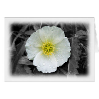 White Poppy After the Rain; Thank You Card