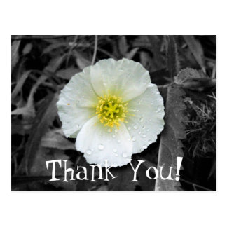 White Poppy After the Rain; Thank You Postcard