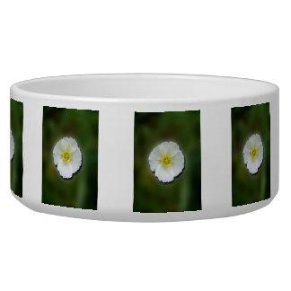 White Poppy Blurred Background Bowl