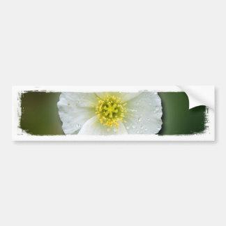 White Poppy Blurred Background Car Bumper Sticker