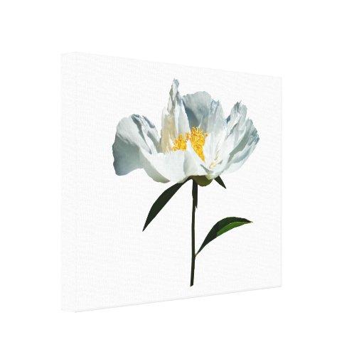 White Poppy Profile Canvas Prints