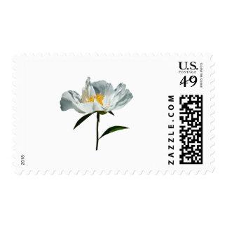 White Poppy Profile Postage