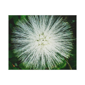 White Powder Puff Flower Canvas Print