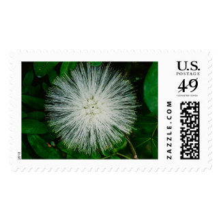 White Powder Puff Flower Postage