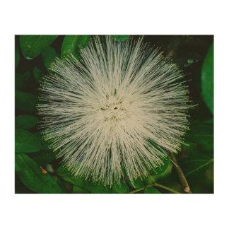 White Powder Puff Flower Wood Print