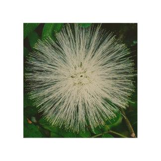 White Powder Puff Flower Wood Wall Art