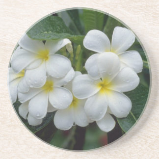 white Prestine cluster of temple flowers flowers Drink Coaster