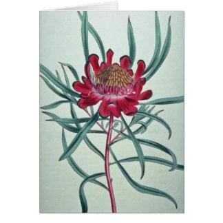 White Protea acuminata flowers Card