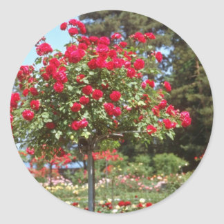 White Public Gardens, Geneva, Switzerland flowers Classic Round Sticker