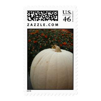White Pumpkin Thanksgiving Postage