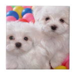 White Puppies In Colored Balls Ceramic Tile