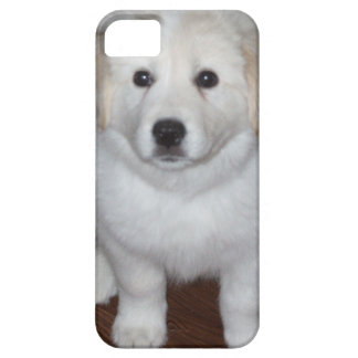 white puppy iphone cover iPhone 5 cover