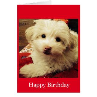 White Puppy on Red Blanket Happy Birthday card