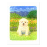 White Puppy Postcards