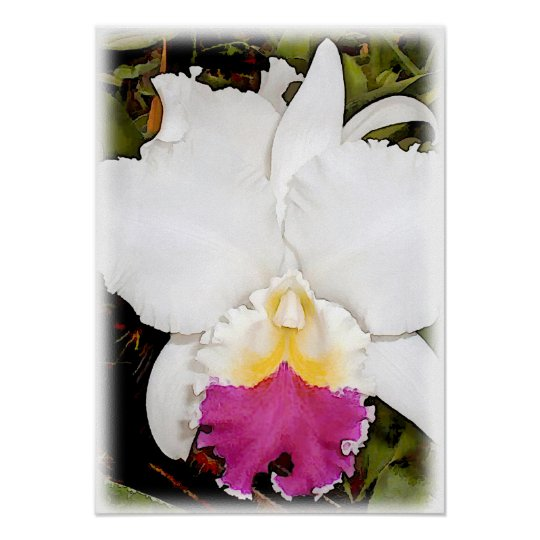 White & Purple Cattleya Orchid Poster