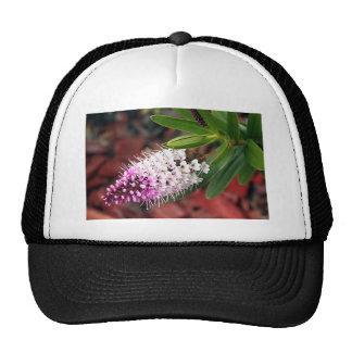 White & purple Hebe flower in bloom Trucker Hat