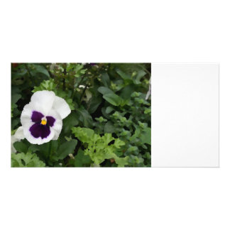 white purple pansy flower against green photo card